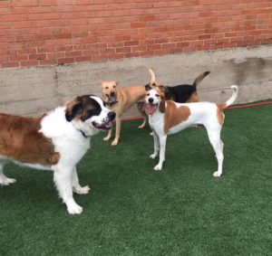Dog Daycare Dallas TX